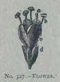 Picture Natural History - No 327 - Flower.png