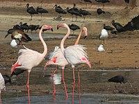 PikiWiki Israel 53084 wildlife animals.jpg