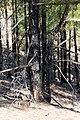 Pilancones Natural Park (MGK25582).jpg