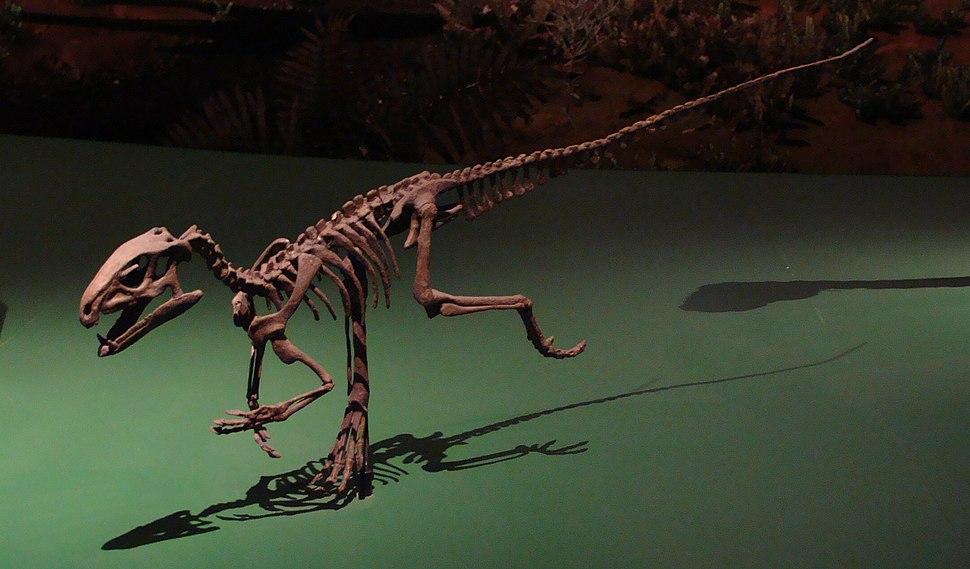 PisanosaurusROM1