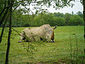 Planète sauvage - Rhinocéros blanc.jpg