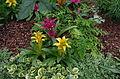 Plantes jaunes et violettes - Kew Gardens 2.JPG