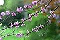 Plants kornik arboretum spring.jpg