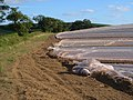 Plastic farming on Round Hill - geograph.org.uk - 201634.jpg