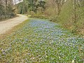 Ploetzensee - Hans-Schomburgk-Promenade - geo.hlipp.de - 35008.jpg