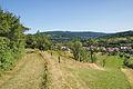 Pohled na obec od západu, Javorník, okres Hodonín.jpg