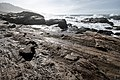 Point Lobos State Natural Reserve 1 18 19 (45922949815).jpg