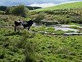 Pond near Cammen Mawr Farm, Llanfihangel - geograph.org.uk - 559267.jpg