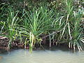 Pookode Lake - snap - dec 2011 0124.JPG