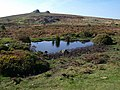 Pool near Haytor - geograph.org.uk - 1497156.jpg