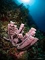 Poseidon's pipe organ (38150496662).jpg