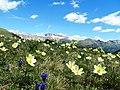Prati verdi ,fiori ,montagne e cielo azzurro, cosa volere di piu - panoramio.jpg