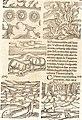 Prodigiorvm ac ostentorvm chronicon - quae praeter naturae ordinem, motum, et operationem, et in svperioribus and his inferioribus mundi regionibus, ab exordio mundi usque ad haec nostra tempora, (14597293999).jpg