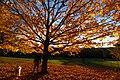 Prospect Park New York November 2016 003.jpg