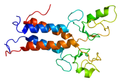 Protein BARD1 PDB 1jm7.png