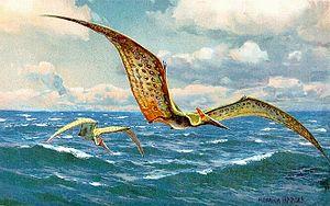 Pteranodon, representation by Heinrich Harder (1916)