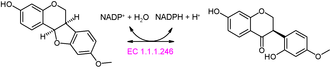 Medicarpin - Pterocarpin synthase reaction
