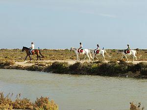 Punta Entinas Sabinar 2.jpg