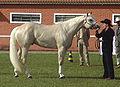 Quarter Horse(REFON).jpg