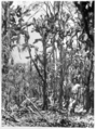 Queensland State Archives 3035 Prickly pear forest c 1930.png