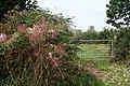 Rackenford, approaching Bulworthy Knap - geograph.org.uk - 234515.jpg