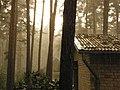 Rain in Afternoon - panoramio - Paul Berzinn.jpg
