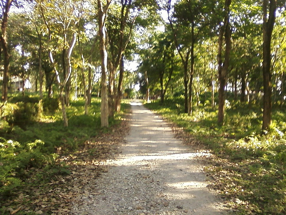Rasikbil bird Sanctuary in Cooch Behar District 2
