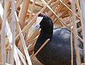 Red-knobbed Coot (Fulica cristata) (45320944485).jpg