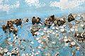 Restes de coquillages et d'algues sur la carène d'un voilier (5).JPG