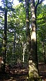 Rezerwat przyrody Bukowiec (województwo łódzkie) 02.jpg