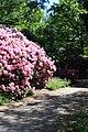 Rhododendronpark Bremen 20090513 114.JPG