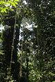 Rideau naturel - forêt du banco.JPG