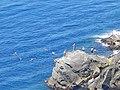Riomaggiore 389-swimming.jpg