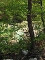 Riserva Naturale di Monterano.JPG