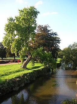 River Trent - Trentham Gardens - geograph.org.uk - 248271
