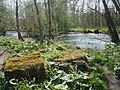 River Wye - geograph.org.uk - 1264415.jpg