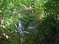 Rivière (Guémar) (4).jpg