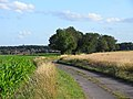 Road, Mapledurham - geograph.org.uk - 1595621.jpg