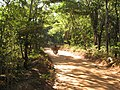 Road to the Makonde Plateau.jpg