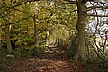 Robin Wood in autumn - geograph.org.uk - 1042898.jpg