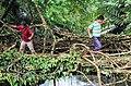 Root bridge, Burma village.jpg