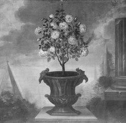 Rosenträd i en kruka