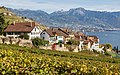Route de Sallaz, Rivaz (Lavaux).jpg