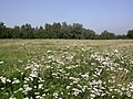 Ruderal vegetation (2144978568).jpg
