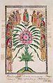 Russian princes family tree (1660-80s, Tatiana Mikhailovna's sinodik, GIM).jpg