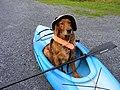 SH Jake the Dog (Foxes) (15353049902).jpg