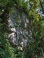 SL Sinharaja Forest asv2020-01 img21.jpg
