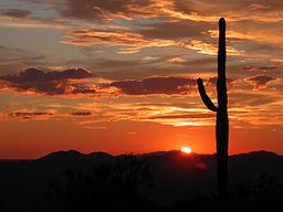 Saguaro National Park Saguaro Sunset 9924