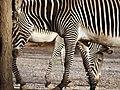 Saint Louis Zoo 020.jpg