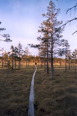 Salamajärvi National Park is partly located in Kinnula